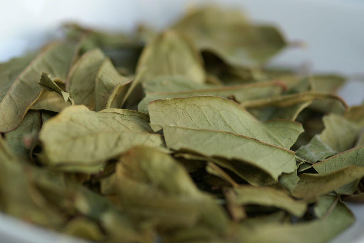 Granatapfelblätter