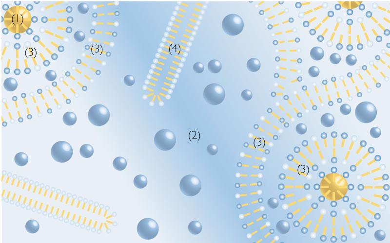 4 Phasen einer Emulsion