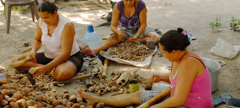 Aufschlagen von Babassunüssen, aus denen Babassuöl gepresst wird
