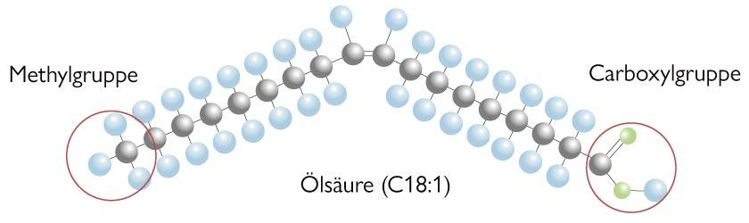 Basiswissen »Fettsäuren«: Die beiden Molekül-Gruppen (Metyhlgruppe und Carboxylgruppe)  einer Fettsäure