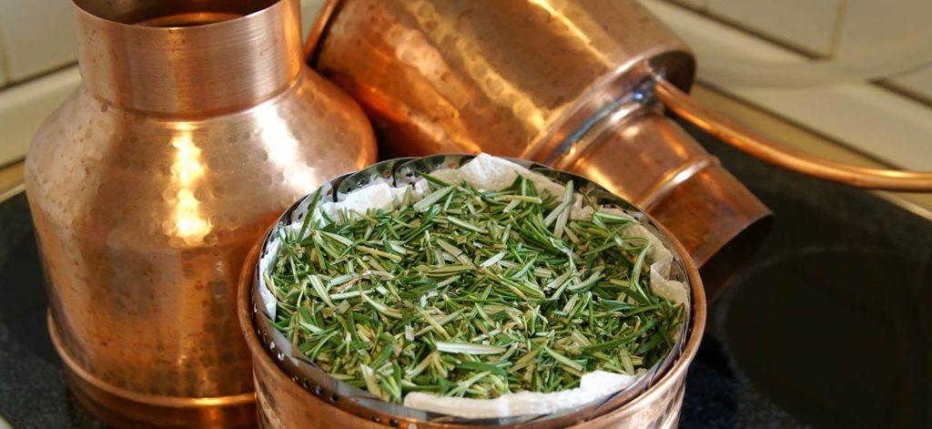 Geschnittener frischer Rosmarin vor der Destillation im Aromakorb