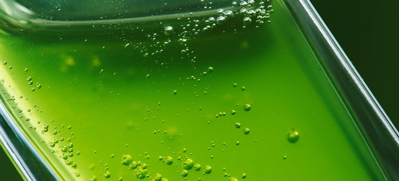 Grün eingefärbtes Duschgel