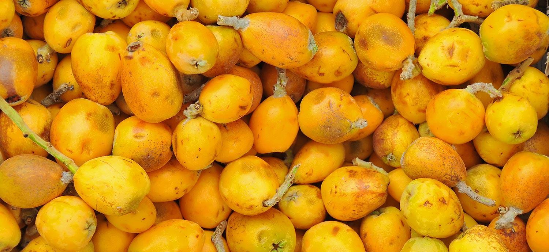 Marulafrüchte