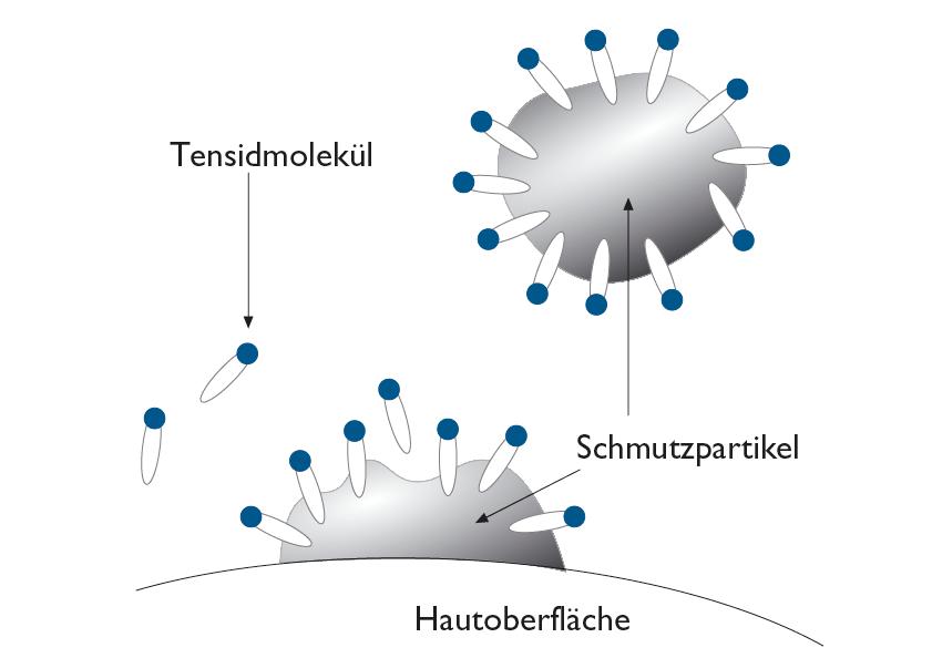 Tensidwirkung: Reinigungskraft durch Mizellen