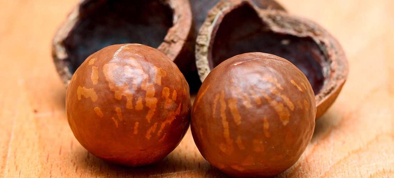 Macadamianussöl wird aus diesen Nüssen gepresst