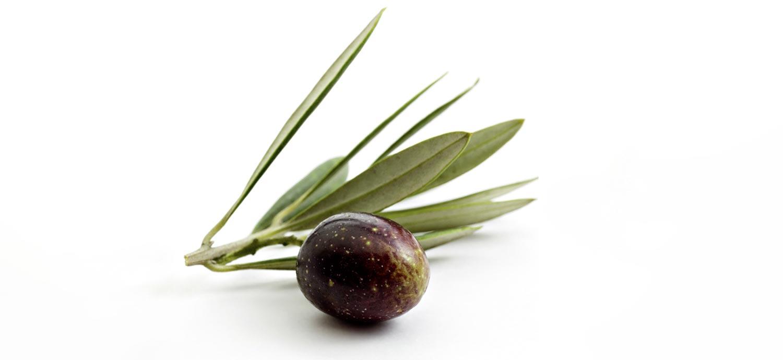 Olive, aus der Olivenöl gepresst werden kann