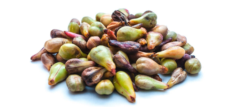 Traubenkerne, aus denen Traubenkernöl gepresst wird